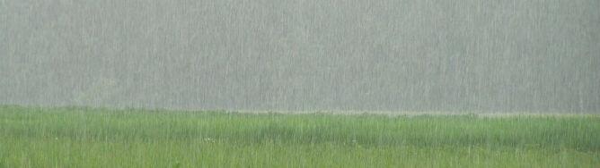 Niedziela: deszcz skuteczniejszy nawet od kropel do nosa