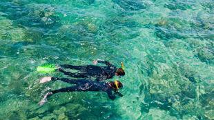 Degradacja Wielkiej Rafy Koralowej postępuje mimo podjętej ochrony