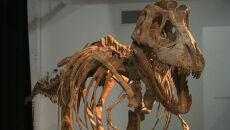 Kup pan tyranozaura
