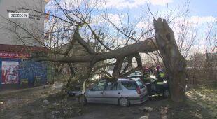 Zniszczenia po wichurze w Szczecinie